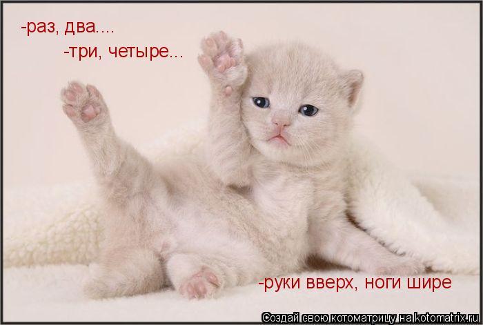 Котоматрица: -раз, два.... -три, четыре... -руки вверх, ноги шире