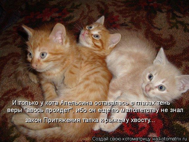 """Котоматрица: закон Притяжения тапка к рыжему хвосту... И только у кота Апельсина оставалась в глазах тень  веры """"авось пройдет"""", ибо он еще по малолетству"""