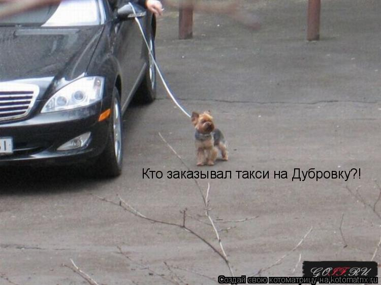 Котоматрица: Кто заказывал такси на Дубровку?!