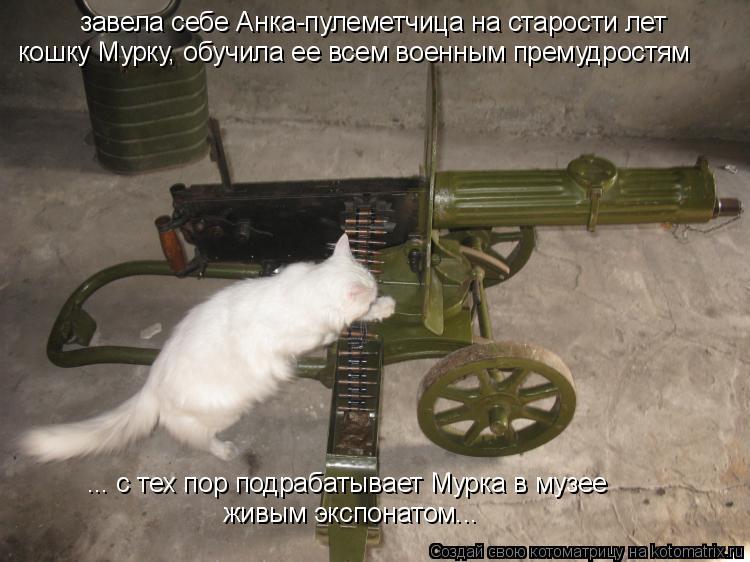 Котоматрица: завела себе Анка-пулеметчица на старости лет кошку Мурку, обучила ее всем военным премудростям ... с тех пор подрабатывает Мурка в музее жив