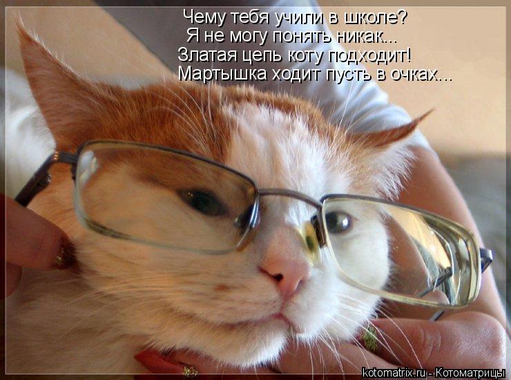 Котоматрица: Чему тебя учили в школе? Я не могу понять никак... Златая цепь коту подходит! Мартышка ходит пусть в очках...