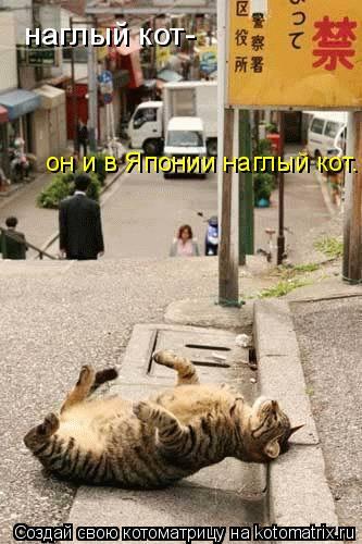 Котоматрица: наглый кот- он и в Японии наглый кот.