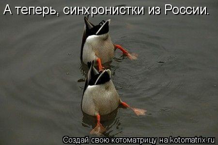 Котоматрица: А теперь, синхронистки из России.