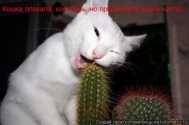 Котоматрица: Кошка плакала, кололась, но продолжала жрать кактус!