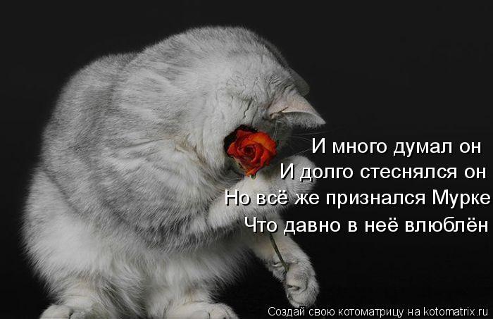 Котоматрица: И много думал он И долго стеснялся он Но всё же признался Мурке Что давно в неё влюблён