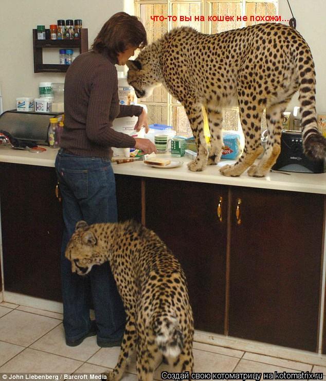 Котоматрица: что-то вы на кошек не похожи...