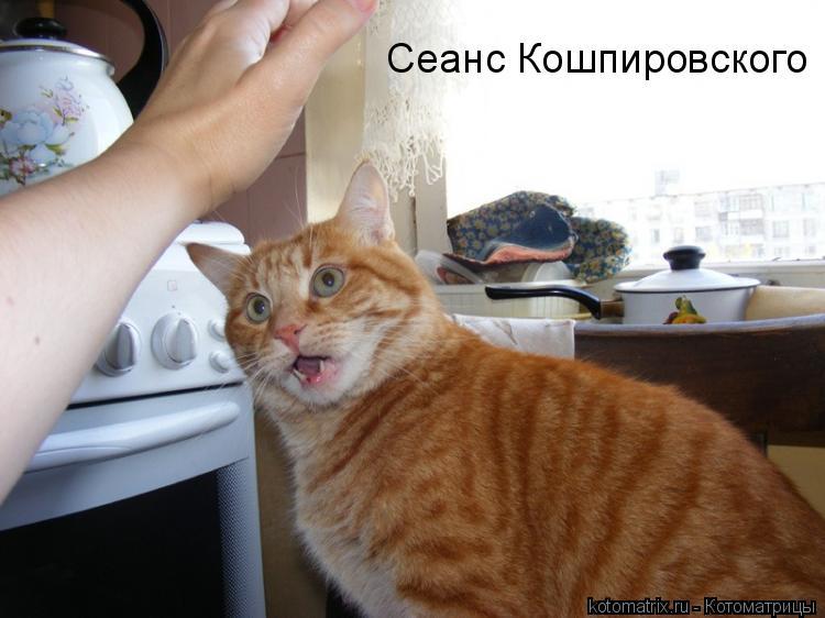 Котоматрица: Сеанс Кошпировского