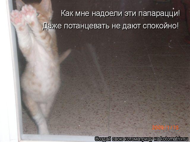 Котоматрица: Как мне надоели эти папарацци! Даже потанцевать не дают спокойно!