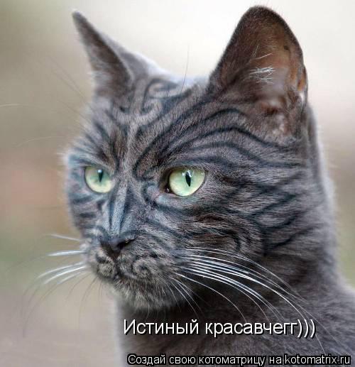 Котоматрица: Истиный красавчегг)))