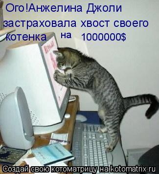 Котоматрица: Ого!Анжелина Джоли  застраховала хвост своего котенка на 1000000$