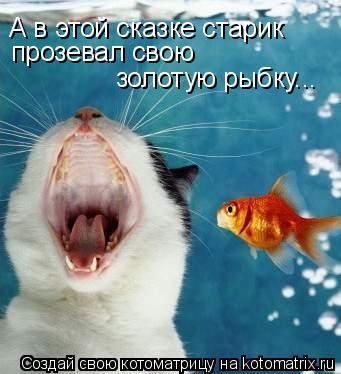 Котоматрица: А в этой сказке старик прозевал свою  золотую рыбку...