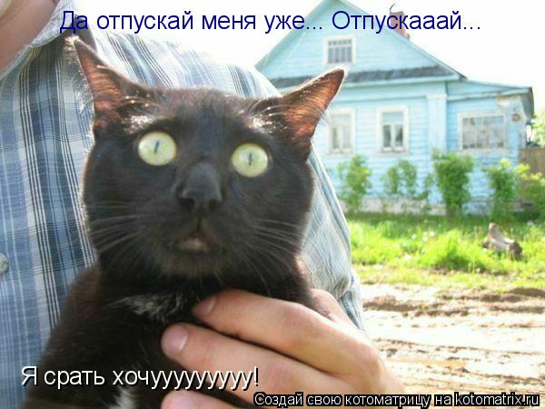 Котоматрица: Да отпускай меня уже... Отпускааай... Я срать хочууууууууу!