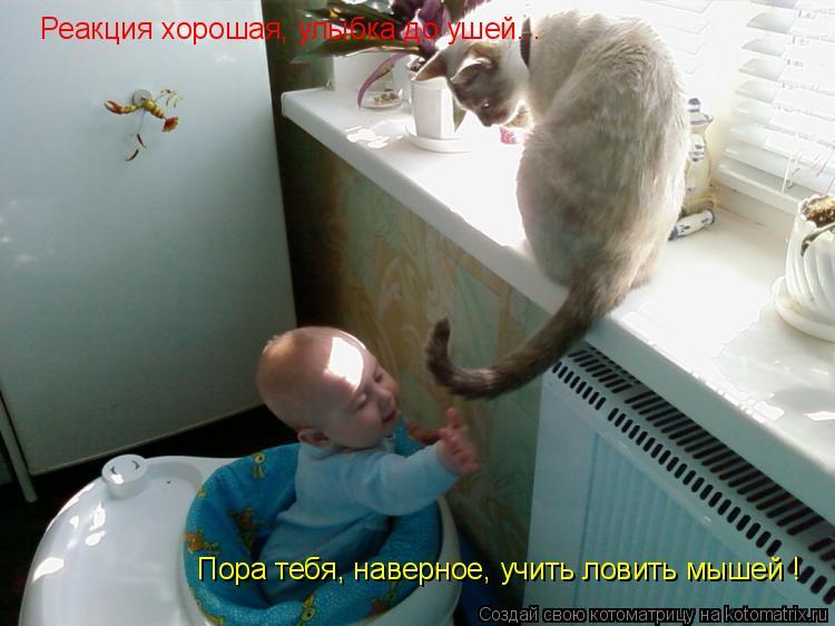 Котоматрица: Реакция хорошая, улыбка до ушей... Пора тебя, наверное, учить ловить мышей !