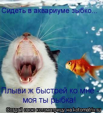 Котоматрица: Сидеть в аквариуме зыбко... Плыви ж быстрей ко мне - моя ты рыбка!