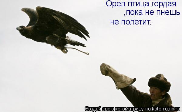 Котоматрица: Орел птица гордая ,пока не пнешь  не полетит.