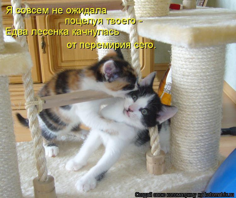 Котоматрица: Я совсем не ожидала поцелуя твоего - Едва лесенка качнулась от перемирия сего.
