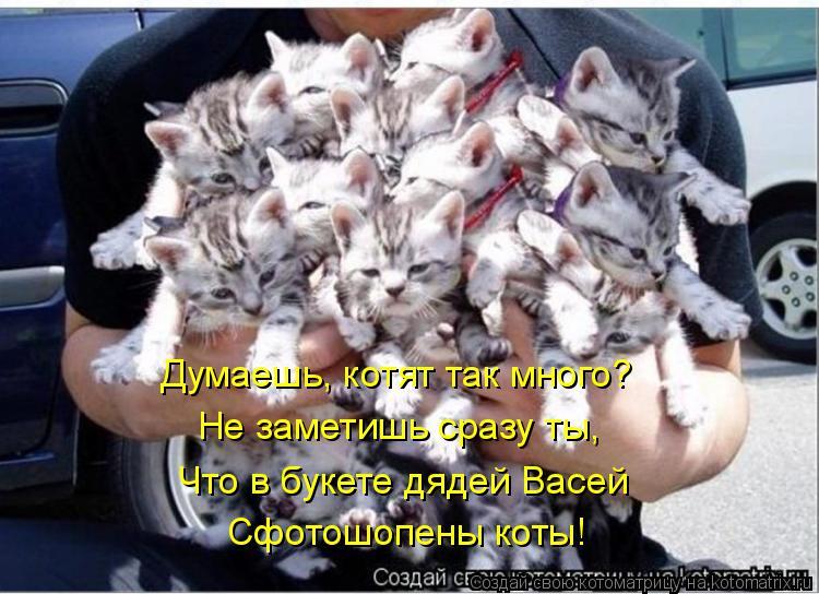 Котоматрица: Думаешь, котят так много? Не заметишь сразу ты, Что в букете дядей Васей Сфотошопены коты!