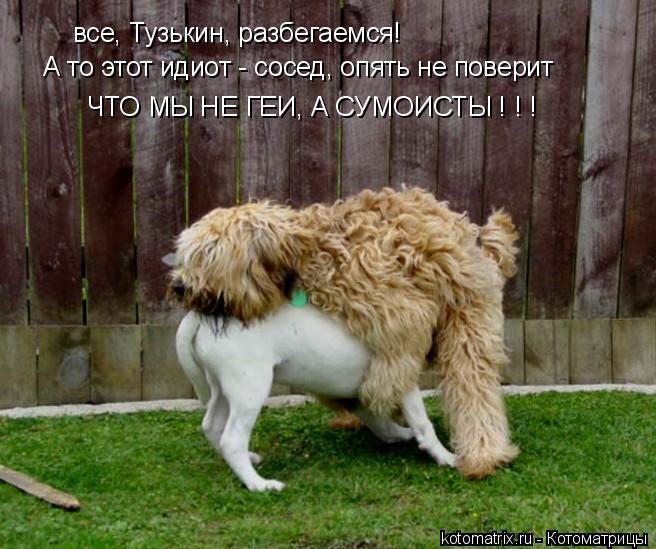 Котоматрица: все, Тузькин, разбегаемся! А то этот идиот - сосед, опять не поверит ЧТО МЫ НЕ ГЕИ, А СУМОИСТЫ ! ! !