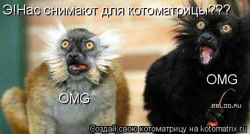 Котоматрица: Э!Нас снимают для котоматрицы??? OMG OMG