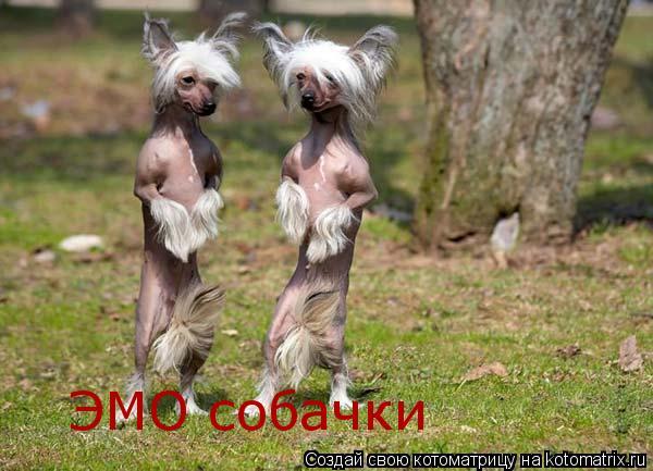 Котоматрица: ЭМО собачки