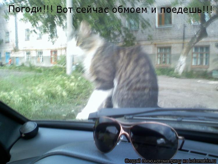 Котоматрица: Погоди!!! Вот сейчас обмоем и поедешь!!!