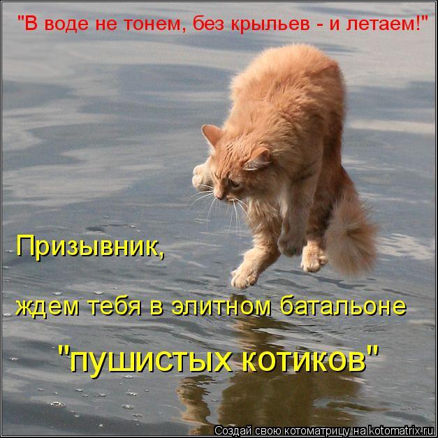 """Котоматрица: """"В воде не тонем, без крыльев - и летаем!"""" Призывник, ждем тебя в элитном батальоне """"пушистых котиков"""""""