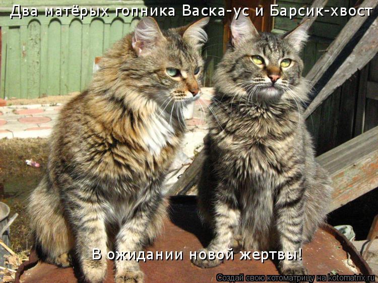 Котоматрица: Два матёрых гопника Васка-ус и Барсик-хвост В ожидании новой жертвы!