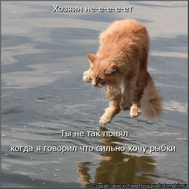 Котоматрица: Хозяин не-е-е-е-ет Ты не так понял когда я говорил что сильно хочу рыбки