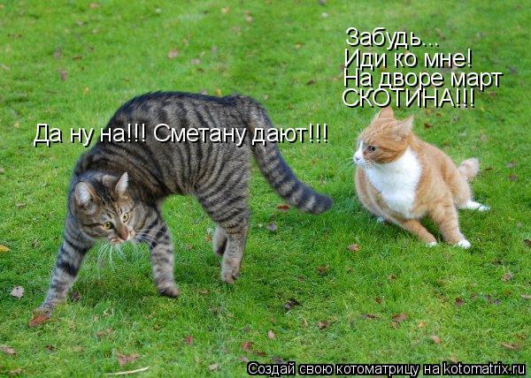 Котоматрица: Да ну на!!! Сметану дают!!! Забудь... Иди ко мне! На дворе март СКОТИНА!!!