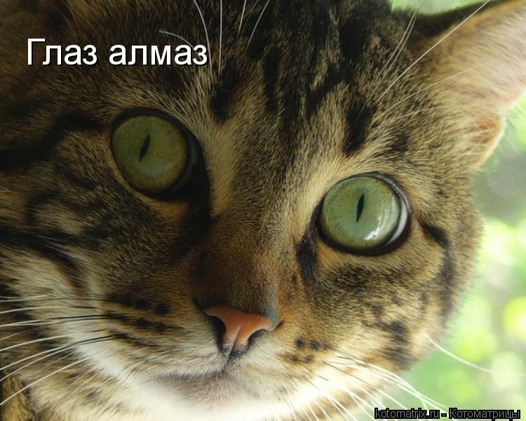 Котоматрица: Глаз алмаз