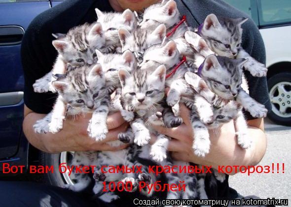 Котоматрица: Вот вам букет самых красивых котороз!!! 1000 Рублей