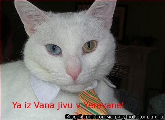 Котоматрица: Ya iz Vana jivu v Yerevane!