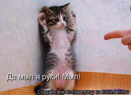 Котоматрица: Да мыл я руки! Мыл!