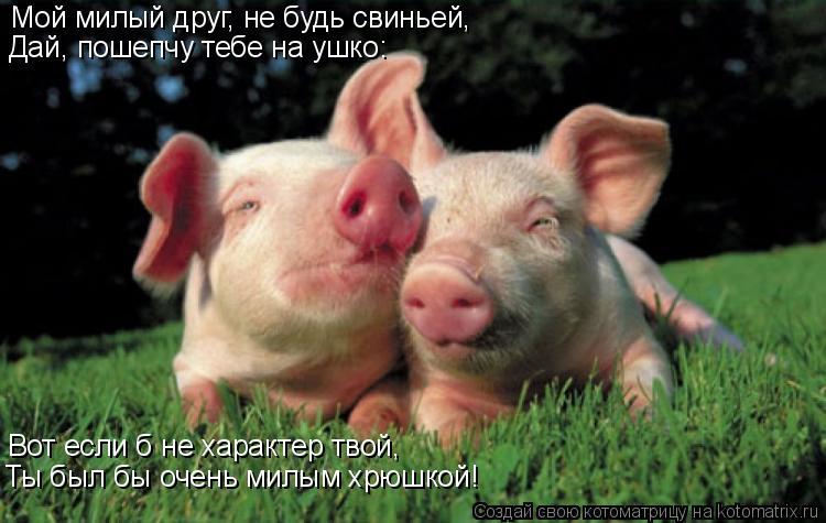 Котоматрица: Мой милый друг, не будь свиньей, Дай, пошепчу тебе на ушко: Вот если б не характер твой, Ты был бы очень милым хрюшкой!