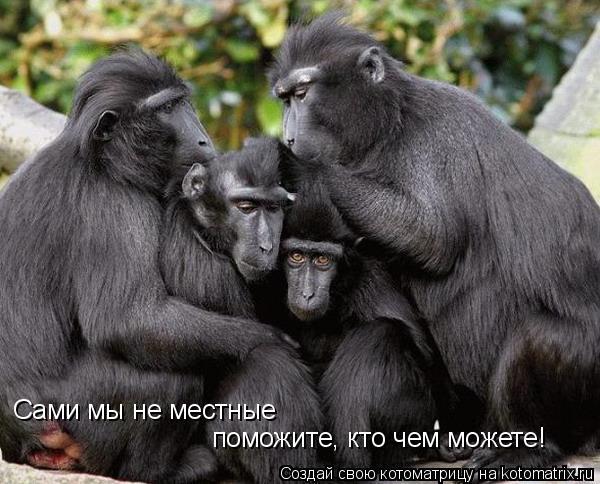 Котоматрица: Сами мы не местные поможите, кто чем можете!