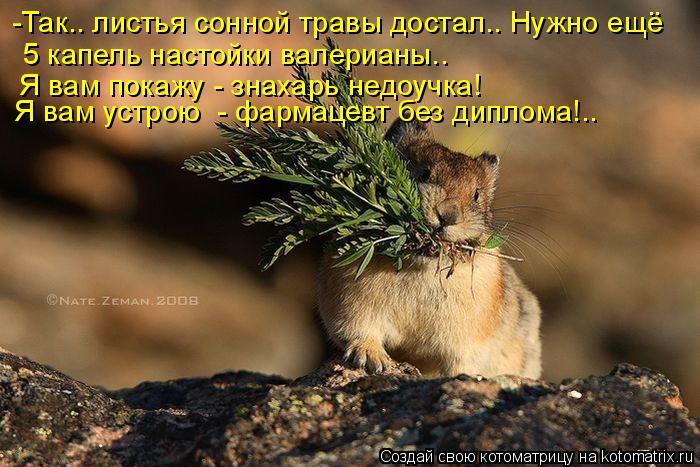 Котоматрица: Так, листья сонной травы достал.. -Так.. листья сонной травы достал.. Нужно ещё  5 капель настойки валерианы..  Я вам покажу - знахарь недоучка! Я