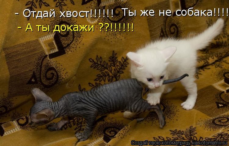 Котоматрица: - Отдай хвост!!!!!!  Ты же не собака!!!!!!  - А ты докажи ??!!!!!!
