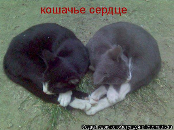 Котоматрица: кошачье сердце