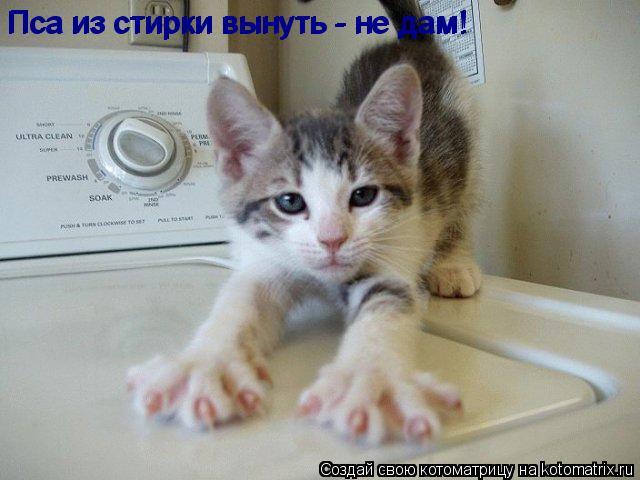 Котоматрица: Пса из стирки вынуть - не дам! Пса из стирки вынуть - не дам!