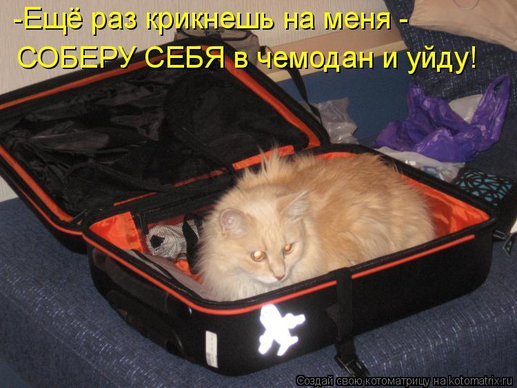 Котоматрица: -Ещё раз крикнешь на меня -  СОБЕРУ СЕБЯ в чемодан и уйду!