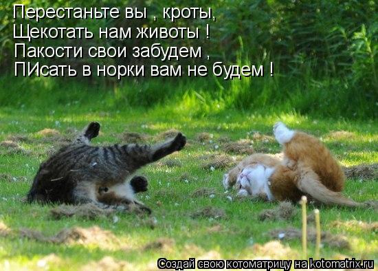 Котоматрица: Перестаньте вы , кроты, Щекотать нам животы ! Пакости свои забудем , ПИсать в норки вам не будем !