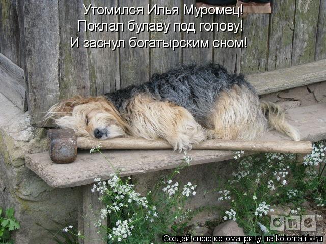 Котоматрица: Утомился Илья Муромец! Поклал булаву под голову! И заснул богатырским сном!