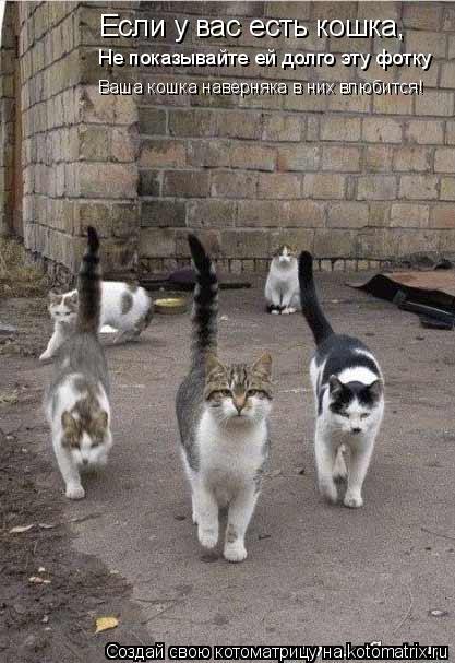Котоматрица: Если у вас есть кошка, Не показывайте ей долго эту фотку Ваша кошка наверняка в них влюбится!
