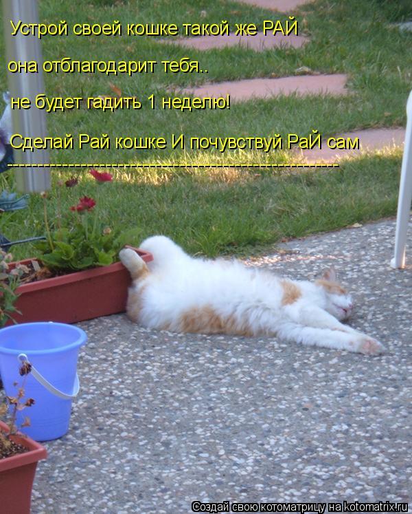 Котоматрица: Устрой своей кошке такой же РАЙ она отблагодарит тебя.. не будет гадить 1 неделю! Сделай Рай кошке И почувствуй РаЙ сам ------------------------------