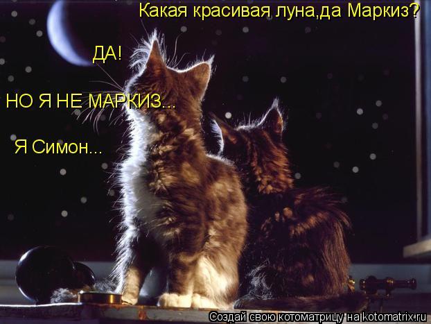 Котоматрица: Какая красивая луна,да Маркиз? ДА! НО Я НЕ МАРКИЗ... Я Симон...