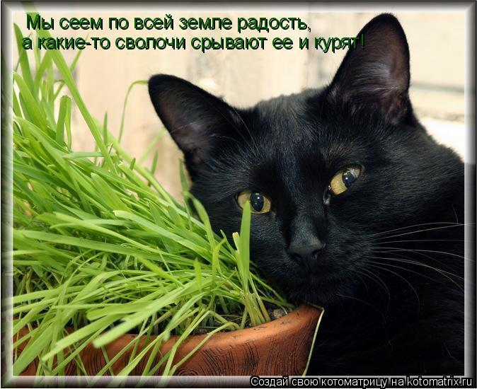 Котоматрица: Мы сеем по всей земле радость, а какие-то сволочи срывают ее и курят!