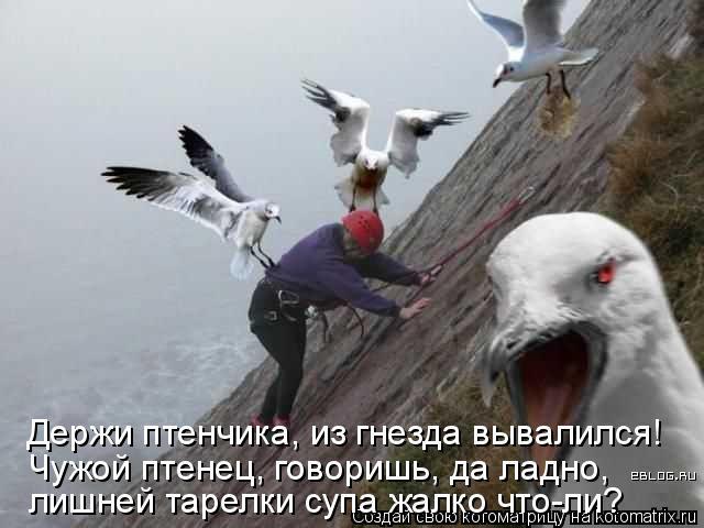 Котоматрица: Держи птенчика, из гнезда вывалился! Чужой птенец, говоришь, да ладно, лишней тарелки супа жалко что-ли?