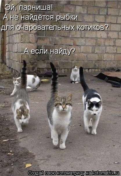 Котоматрица: Эй, парниша! А не найдётся рыбки для очаровательных котиков? А если найду?