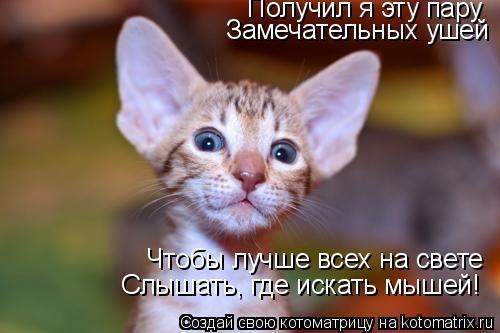 Котоматрица: Получил я эту пару Замечательных ушей Чтобы лучше всех на свете Слышать, где искать мышей!