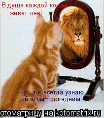 Котоматрица: В душе каждой кошки живет лев!  - ну,  а я всегда узнаю об этом последним!